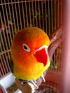 bird2006